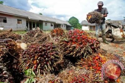 Parlemen Eropa tak ikhlas sawit Indonesia maju
