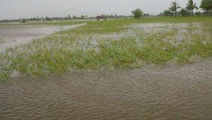 Puluhan hektar sawah di Aceh Utara terendam banjir