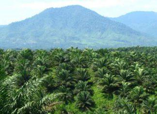 Bupati Aceh Utara minta camat kembangkan potensi SDA