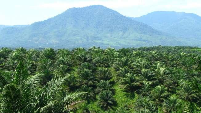 https://www.kanalaceh.com/wp-content/uploads/2017/01/Foto-Lahan-perkebunan-kelapa-sawit-di-Indonesia_perkebunan.litbang.pertanian.go_.id_.jpg
