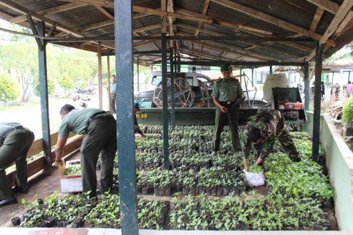 Bantu penuhi kebutuhan, Kodim 0108/Agara tanam 3.500 batang cabai