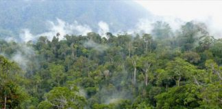 Perhutanan Sosial, peluang bagi Pemerintah Aceh