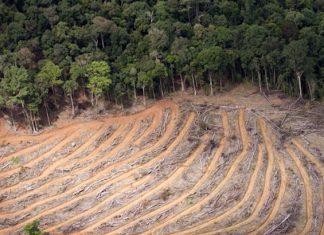 Eksploitasi tambang di Aceh Selatan diduga ada pihak yang bermain