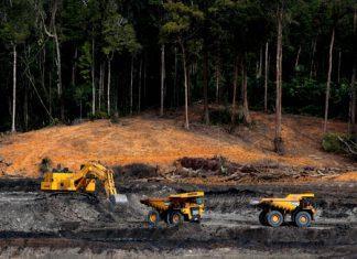Walhi: pertambangan batu bara rusak kawasan hutan