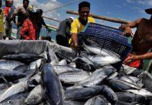 Produksi ikan tuna di Lampulo 2.459 ton