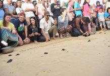 Mahasiswa Unsyiah lepas 120 tukik ke laut