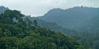 Kurang perhatian, banyak hutan adat tidak jelas di Aceh