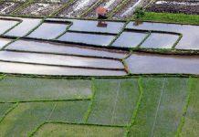 Kementerian Pertanian mengeluh dana program cetak sawah terbatas
