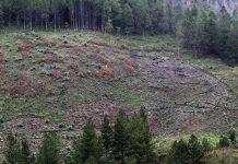 Perusak Hutan Pining Gayo Lues didenda Rp10 juta