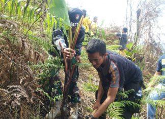 Tanam pohon pisang cegah kebakaran