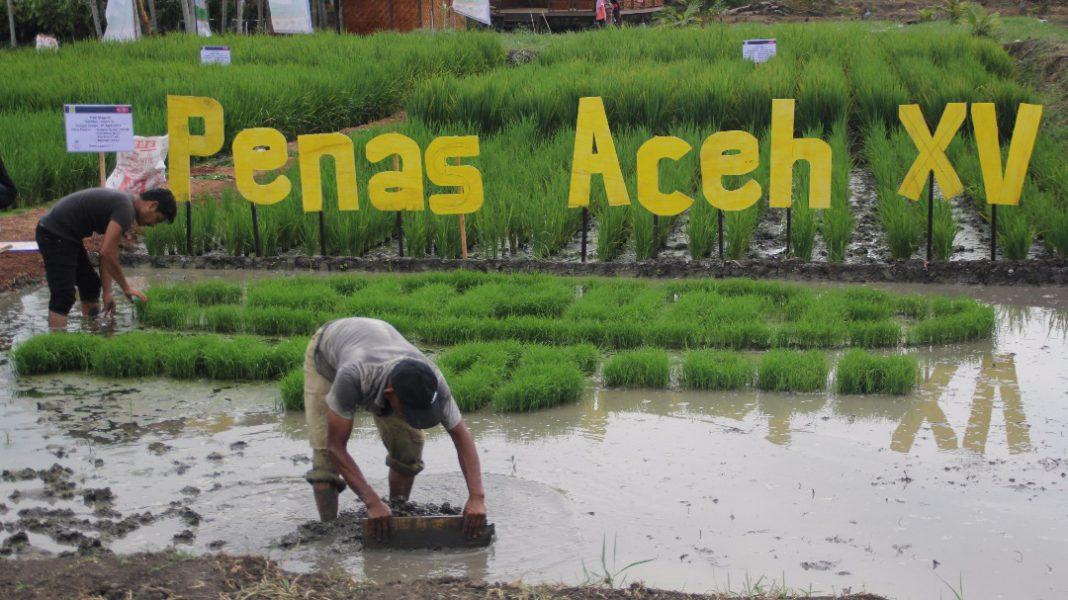 Petani dan nelayan Aceh disarankan hadir ke Penas KTNA