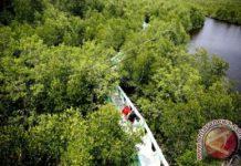 85% hutan mangrove Aceh Tamiang rusak