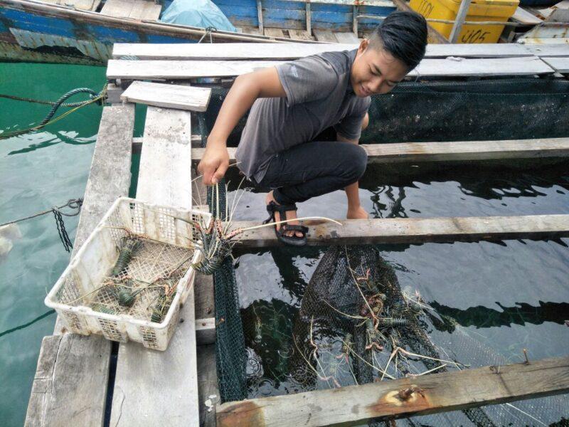 Menikmati lobster murah di Pulau Banyak