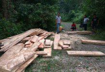 2 pelaku perambahan hutan di Aceh Besar ditangkap