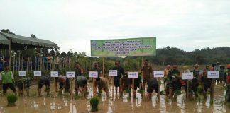Pidie Jaya cetak sawah baru seluas 9,2 hektare