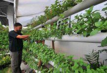 Kelompok tani Aceh Besar pelajari cara tanam pangan hidroponik