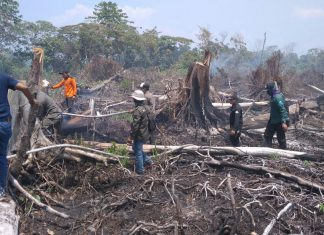 Karena pembukaan lahan, Suaka Margasatwa Rawa Singkil terbakar