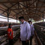 Wagub tinjau UPTD unggas di Aceh Besar