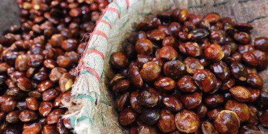 Image result for curi jengkol