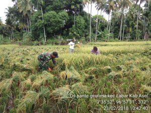 Hasil panen padi di lokasi cetak sawah baru Labuhanhaji Barat capai 7 ton