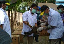 Ratusan unggas dari Thailand dimusnahkan di Banda Aceh